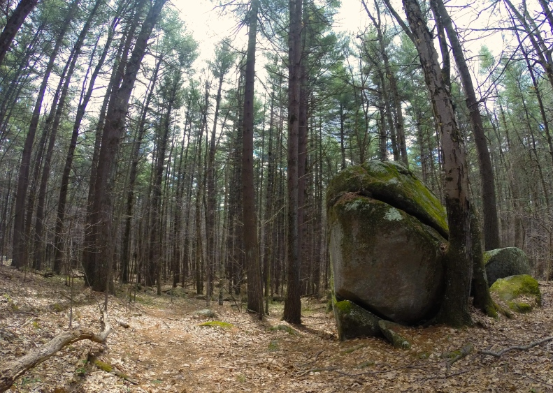 Boulders in Upton State Forest