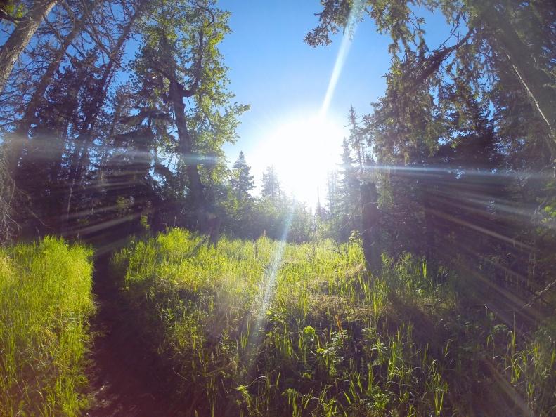 Sunbeams in Homer Alaska