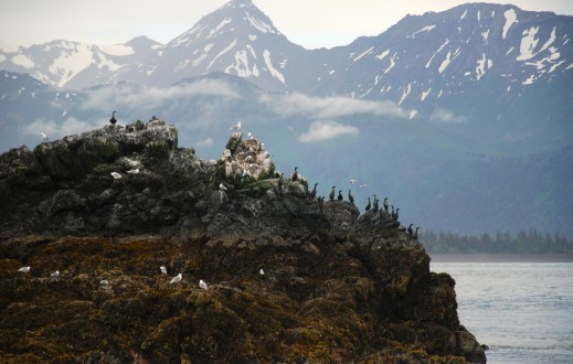 Bird Island in Homer Alaska