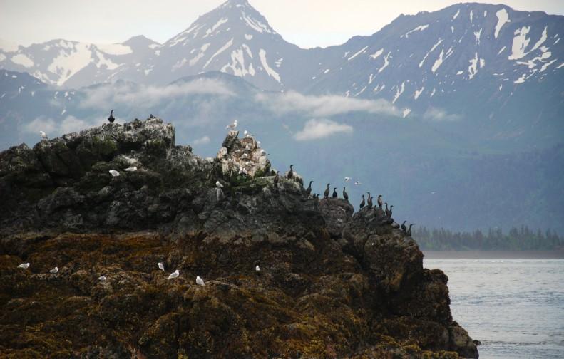 Bird Island in Homer Alaska