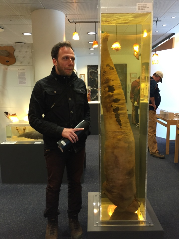 Standing next to a sperm whale dick at the Icelandic Phallological Museum